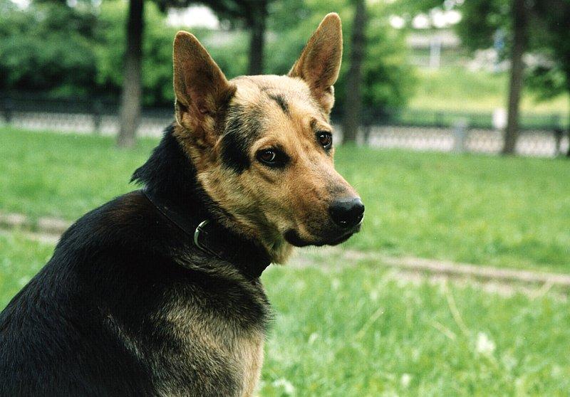 IRON DOG N4